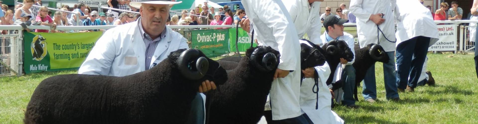 For Sale - Black Welsh Mountain Sheep Breeders Association
